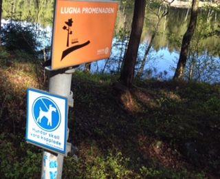 Hundar ska vara kopplade vid Långsjön