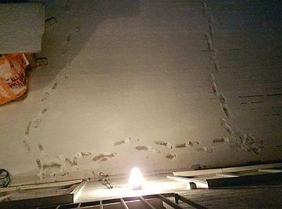 Nya fotspår i snön – ska jag anmäla på 11414?