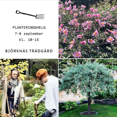 Planteringshelger i Björknäs Trädgård